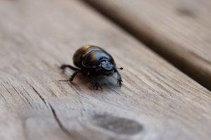 Dissuasori per insetti