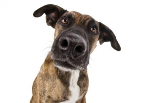 dissuasori per cani