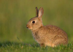 dissuasori per conigli