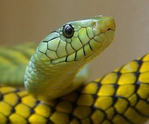dissuasori per serpenti