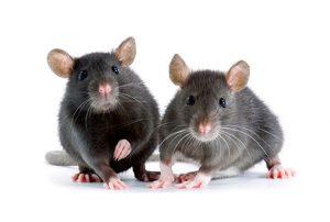 dissuasori per topi