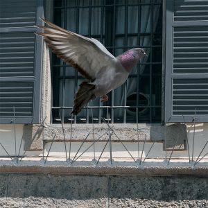 dissuasori per uccelli