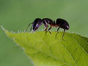 repellente per formiche