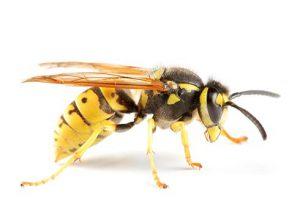 repellente per vespe