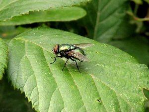 repellente per mosche