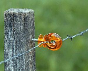 recinzione elettrica per cinghiali